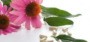 Эхинацея в таблетках: инструкция по использованию препарата
