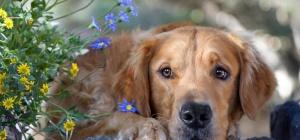 Отчего возникают энтериты у собак и как их лечить
