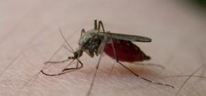 Как лечить комариные укусы