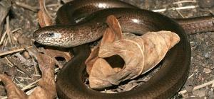 Есть ли средство, отпугивающее змей