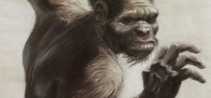Человек умелый - характеристика и образ жизни наших предков