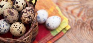 Диетические перепелиные яйца. В чем ценность продукта?