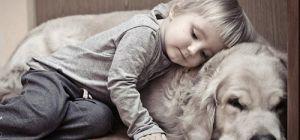 Как золотистые ретриверы помогают детям с аутизмом?