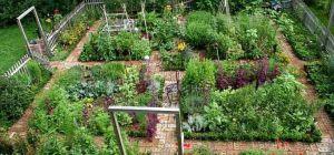Как подготовить свой огород перед поездкой в отпуск