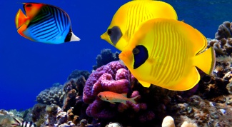 Как сделать аквариум в 2017 году