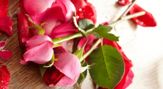 How to plant a rose from the bouquet