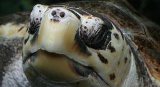Как содержать черепаху в домашних условиях