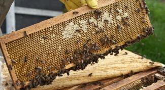 Как разводить пчел