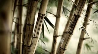 Как ухаживать за бамбуком