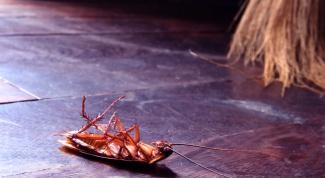 Как избавиться от тараканов при помощи молотого кофе