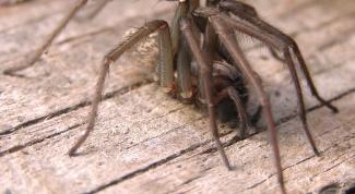 Как избавиться от пауков в квартире