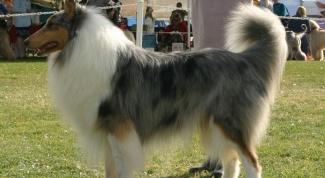 Как научить собаку ходить рядом