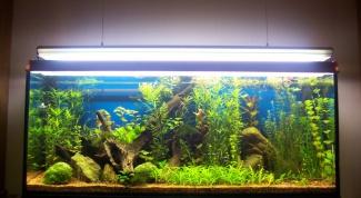 Как заполнить аквариум