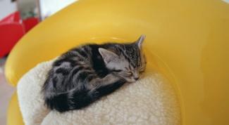 Как приучить котенка к домику