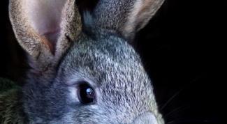 Как наказывать кролика