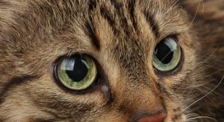 Как удалить запах кота