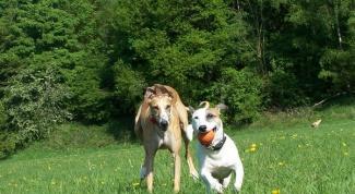 Как подружить собаку и щенка