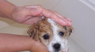 Как помыть щенка