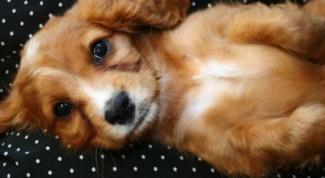 Как подстричь щенку когти