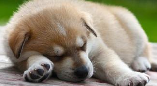 How to increase the dog's immunity