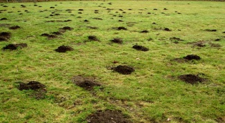 Как избавиться от кротов в огороде
