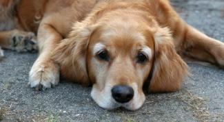 Будка для собаки: как построить быстро и правильно