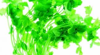 Как заморозить зелень