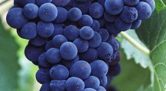 Как нарисовать виноградную лозу