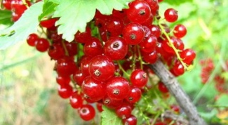How to cook currant compote