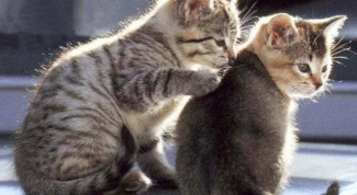 Как примирить котов
