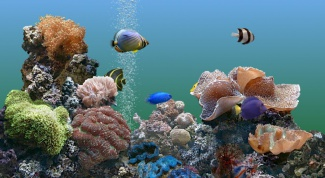 How to get rid of the smell in the aquarium