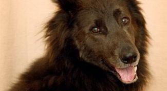 Как кормить собаку натуральным кормом