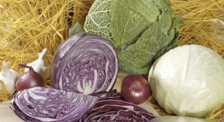 Как квасить капусту рассолом