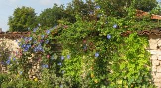 Как украсить стену в саду