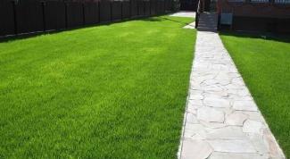Как оформить газон