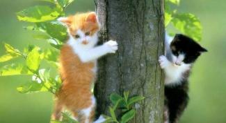 Как выгуливать кошек