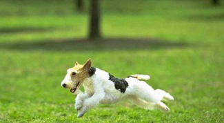 Как приучить собаку к кличке