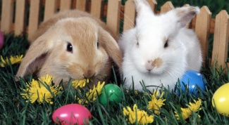 Как выкормить кроликов