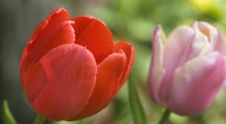 Как вырастить садовые цветы