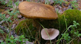 How to distinguish edible mushroom from inedible