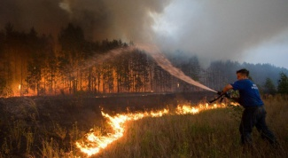 Как спасти леса от пожаров