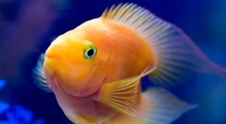 Как избавиться от мути в аквариуме