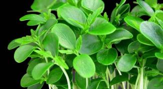 How to grow watercress salad