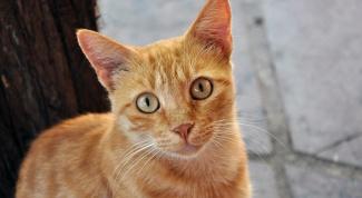 Как избавиться от клещей у кошек