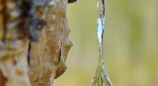 Как вывести пятна от сосновой смолы