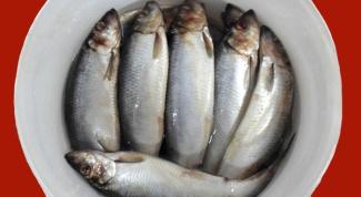 Как сохранить соленую рыбу