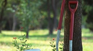 Как подготовить почву в теплице