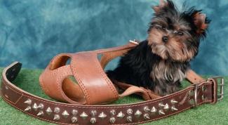 Как подобрать собаке намордник