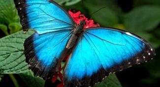 Как кормить бабочек