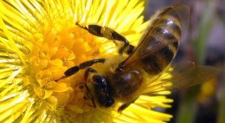 Как составить бизнес-план пчеловодства